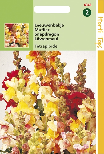 4046 HT Muflier Tetraploïde  0,5 gramme