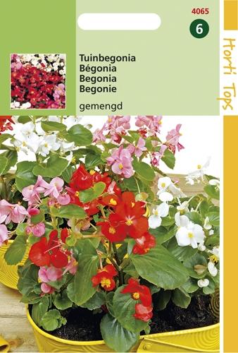 4065 Bégonia varié  0,1 gramme