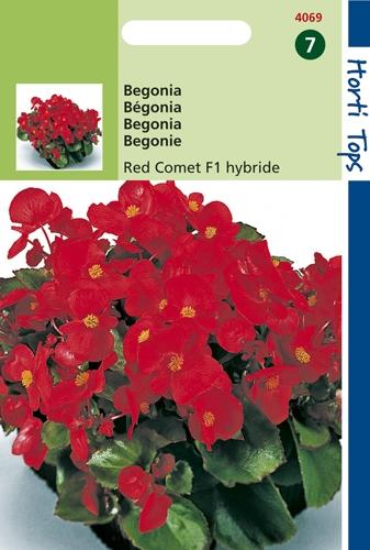 4069 HT Begonia Red Comet F1 hybride 700 zaden