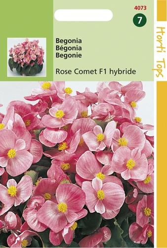 4073 HT Begonia Rose Comet F1 hybride 700 zaden