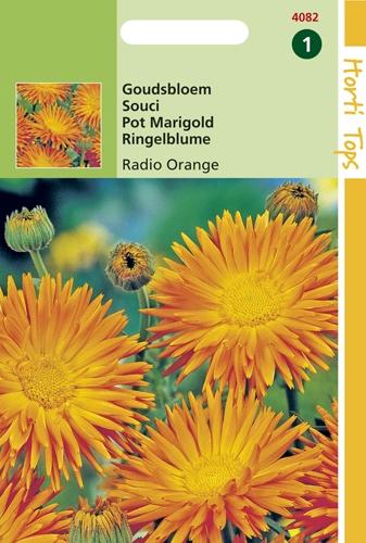 4082 HT Goudsbloem Radio Orange 2 gram