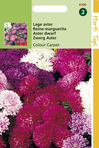 4100 HT Lage aster Colour Carpet 0,5 gram