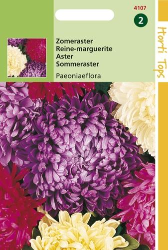 4107 HT Zomeraster Paeoniaeflora 0,75 gram
