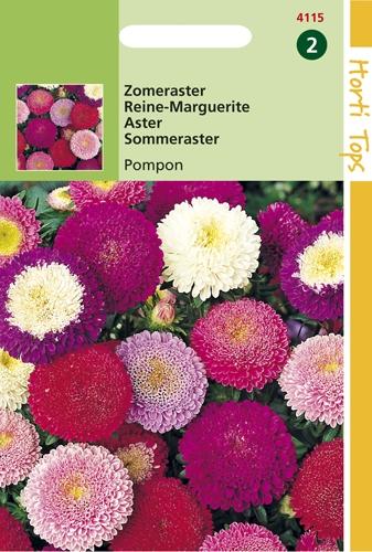 4115 HT Reine-Marguerite Pompon  0,5 gramme