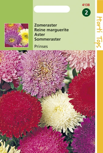 4138 HT Reine-Marguerite Princesse varieté  0,75 gramme