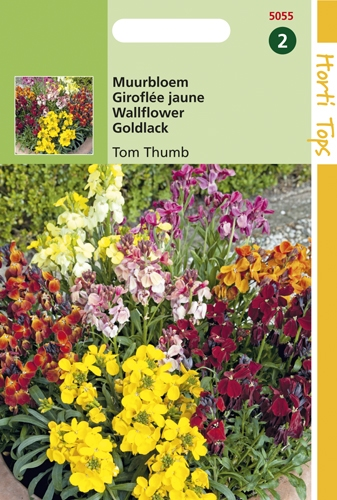 5055 HT Giroflée jaune Tom Thumb  0,5 gramme