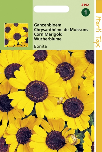 4192 HT Chrysanthème des Moissons  1 gramme