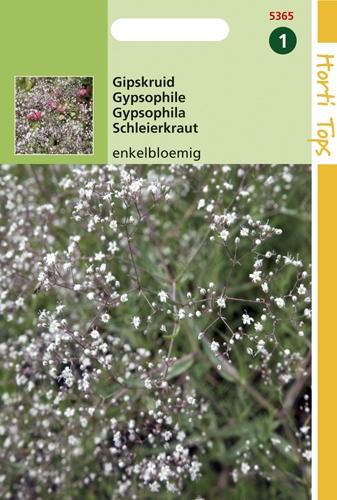 5365 HT Gypsophile à fleur simple  0,5 gramme