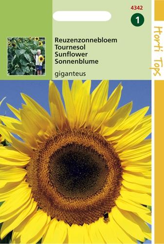 4342 HT Reuzenzonnebloem giganteus 4 gram