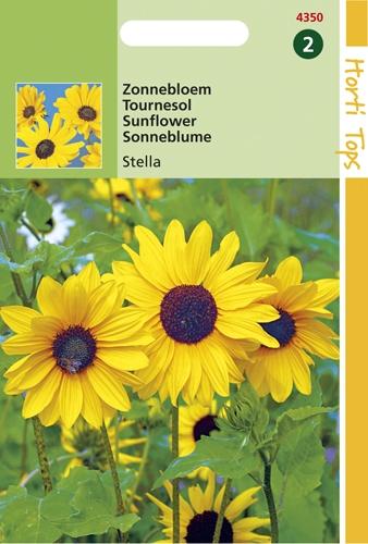 4349 HT Tounesol Stella  1 gramme