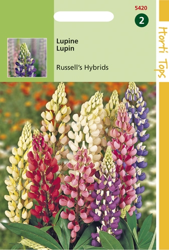 5420 HT Lupin Russell' s Hybrids  2 grammes