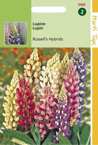 5420 HT Lupine Russell's Hybrids 2 gram