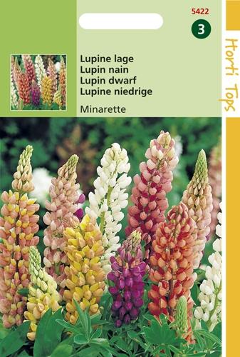 5422 HT Lupin nain Minarette  1,5 gramme