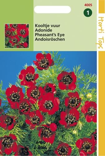 4005 HT Adonide  2 grammes