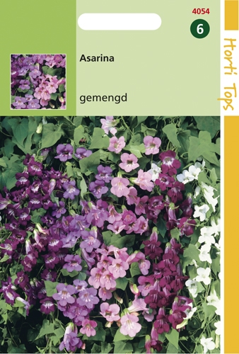 4054 HT Asarina gemengd 25 zaden