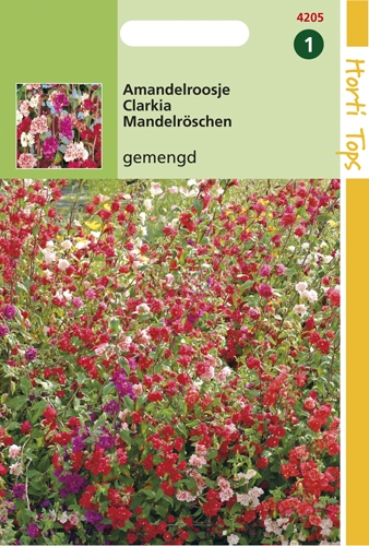 4205 HT Clarkia variée  1 gramme