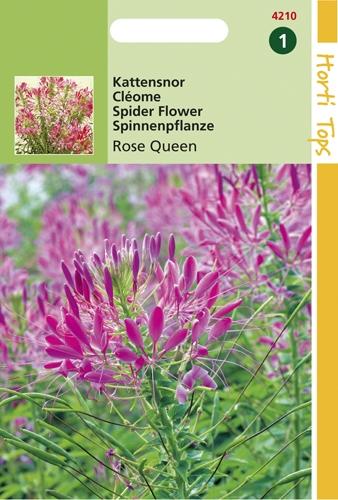 4210 HT Cléome Rose Queen  0,75 gramme
