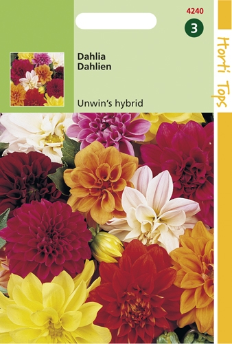 4240 HT Dahlia Unwin's hybrid Hybrids  0,75 gramme