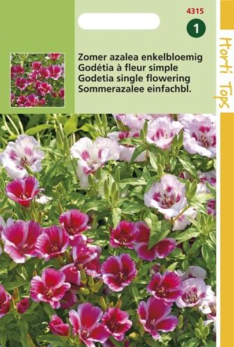 4315 HT Zomer azalea enkelbloemig 0,75 gram