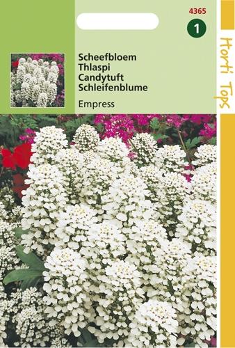 4365 HT Scheefbloem Empress wit 2 gram