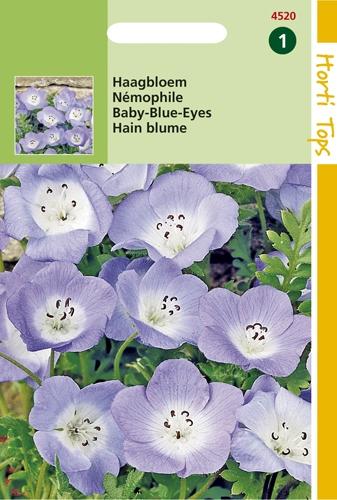 4520 HT Némophile  1 gramme