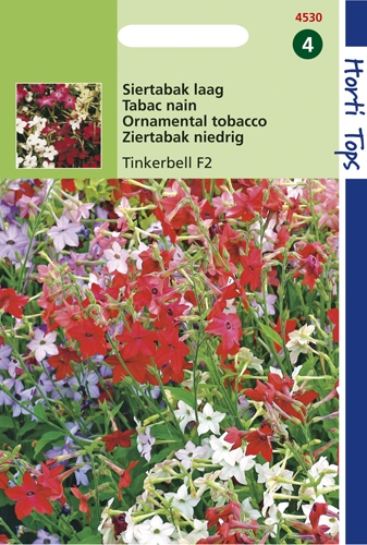 4530 HT Tabac nain Tinkerbell F2 hybride  0,1 gramme