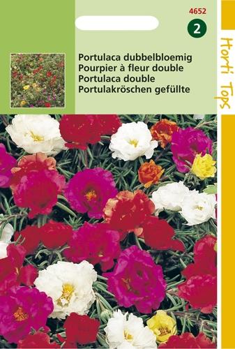 4652 HT Portulaca dubbelbloemig 0,3 gram