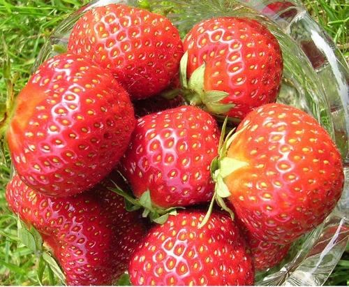 Aardbeienplanten  'Vima Zanta'