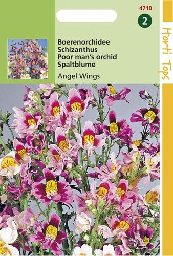 4710 HT Boerenorchidee Angel Wings 0,5 gram