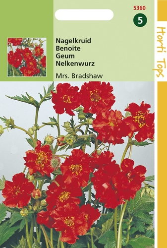 5360 HT Nagelkruid Mrs. Bradshaw rood 0,5 gram