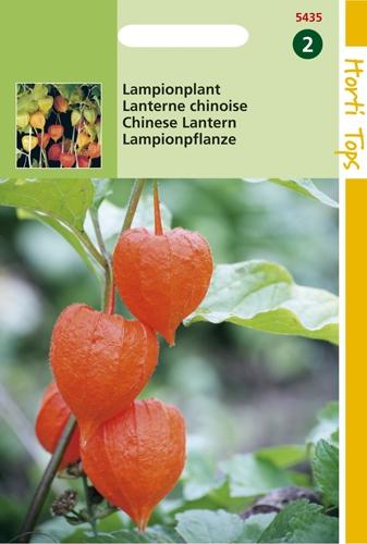 5435 HT Lampionplant 0,25 gram