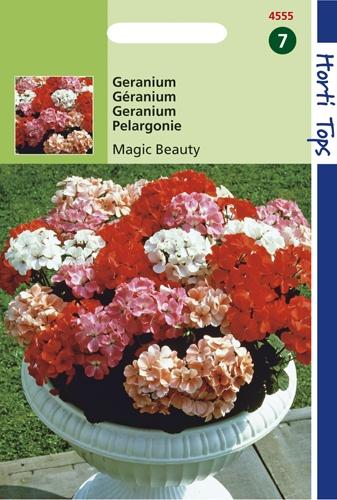 4555 HT Géranium Magic Beauty F1  10 graines
