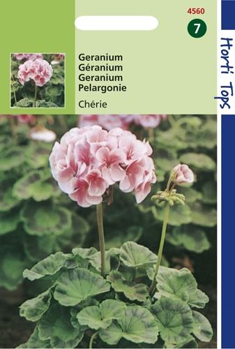 4560 HT Géranium Chérie  10 graines