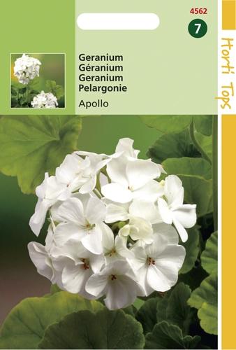 4562 HT Geranium Apollo 10 zaden