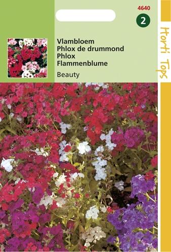 4640 HT Vlambloem Beauty 0,5 gram