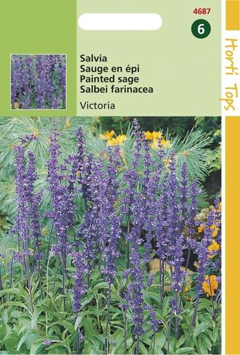 4687 HT Salvia Victoria 0,25 gram