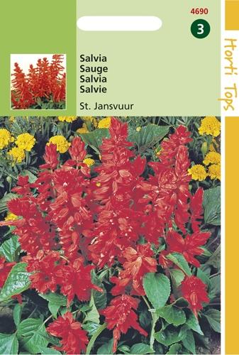 4690 HT Sauge Feu de la St. Jean  0,4 gramme
