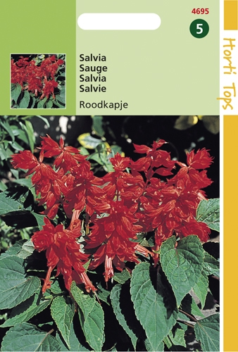 4695 HT Sauge Chaperon rouge  0,5 gramme
