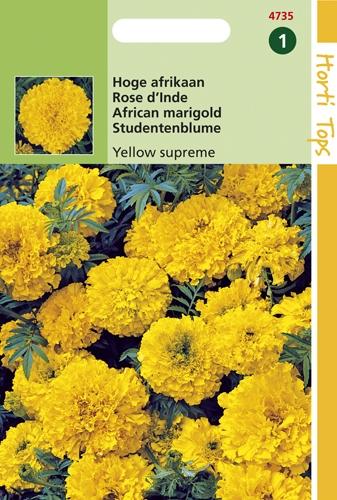4735 HT Hoge afrikaan Yellow supreme 1 gram