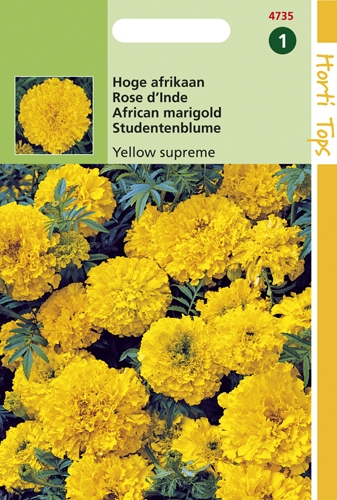 4735 HT Rose d'Inde Yellow supreme  1 gramme