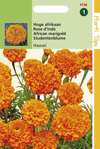 4738 HT Hoge Afrikaan Hawaii 1 gram