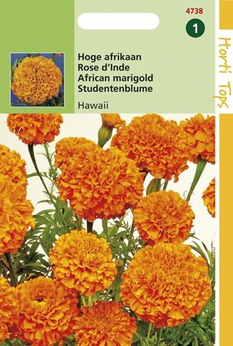 4742 HT Rose d'Inde Sunset Giants en mélange  1 gramme