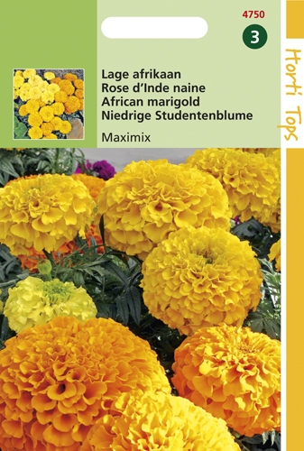 4750 HT Rose d'Inde naine Maximix  0,5 gramme