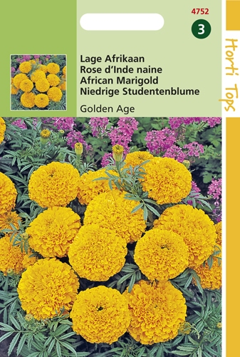 4752 HT Rose d'Inde naine Golden Age  0,5 gramme
