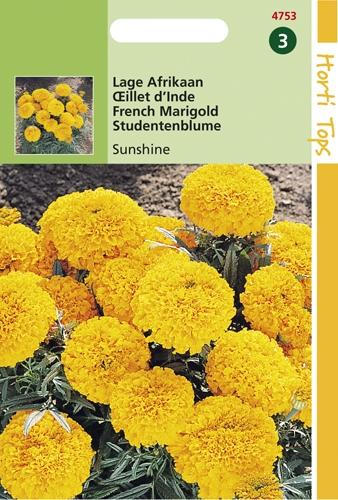 4753 HT Lage Afrikaan Sunshine 0,5 gram