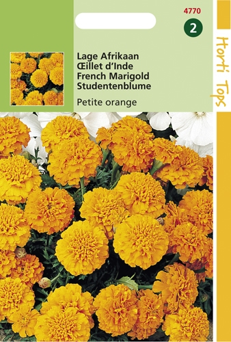 4770 HT Lage Afrikaan Petite Orange 1 gram