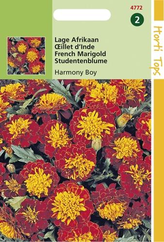 4772 HT Œillet d'Inde Harmony Boy  1 gramme