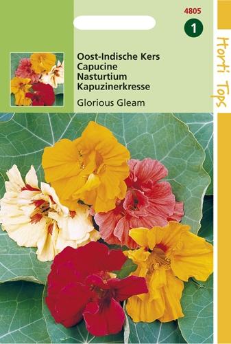 4805 HT Capucine Glorious Gleam  3 grammes