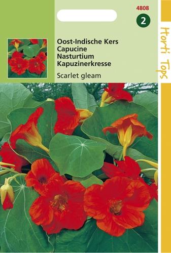 4808 HT Oost-Indische Kers Scarlet gleam 3 gram