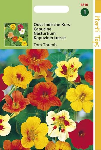 4810 HT Capucine Tom Thumb  3 grammes